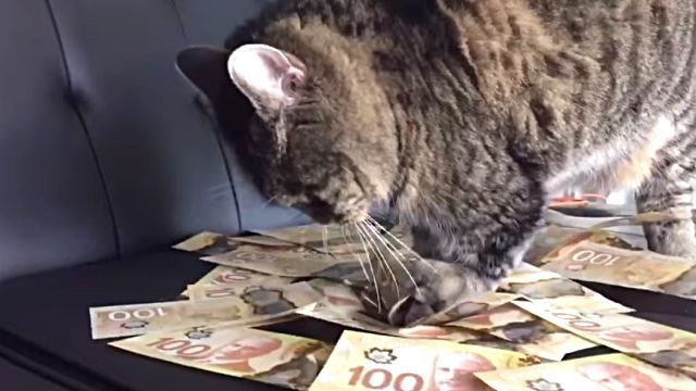 moneycat1