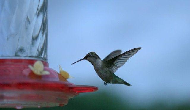 slowmobirds12_e