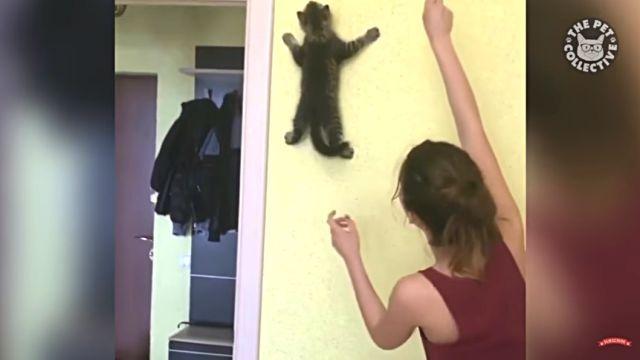 climbingcat2
