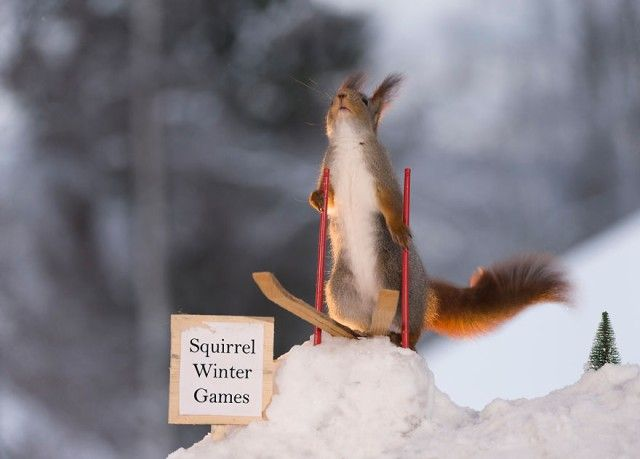 wintersportssquirrel12_e