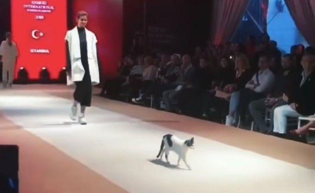 fashionshow0_e