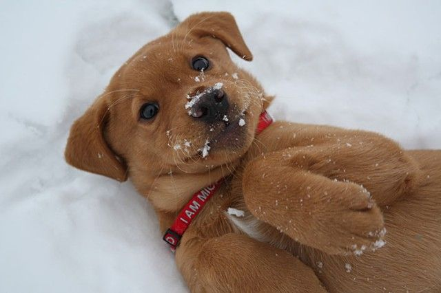 funny-animals-first-snow-cats-dogs38_e