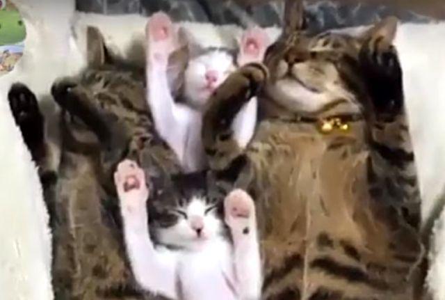 catcat12