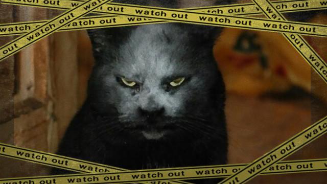 cat-2_e-frame