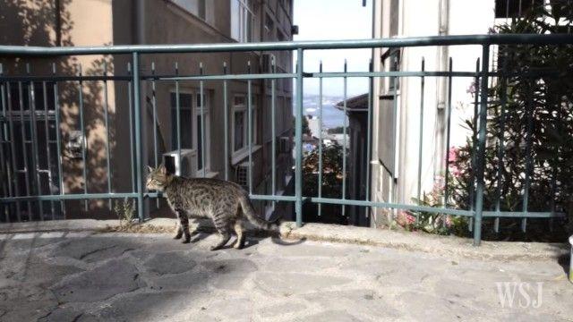 istanbulcats4_e
