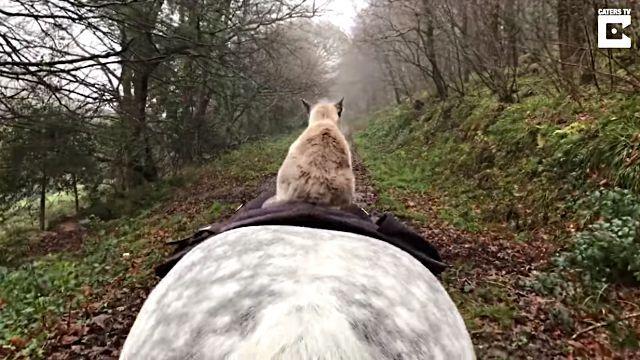 horseridingcat4
