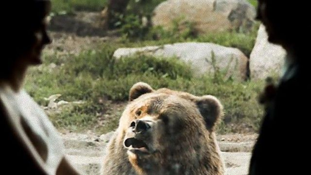 bear-3 [www.imagesplitter.net]_e