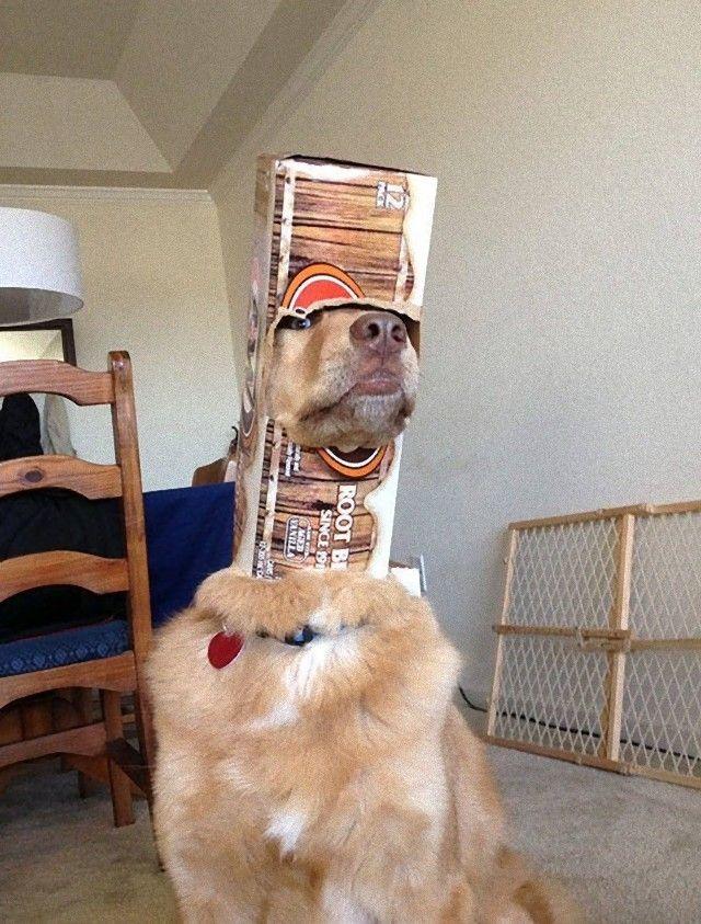 funnydogs11_e