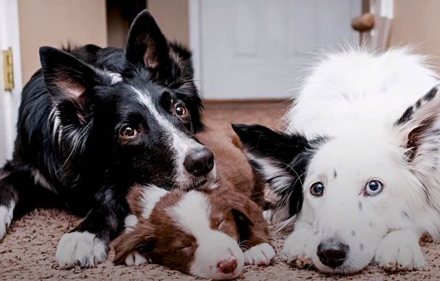 huggingdogs9