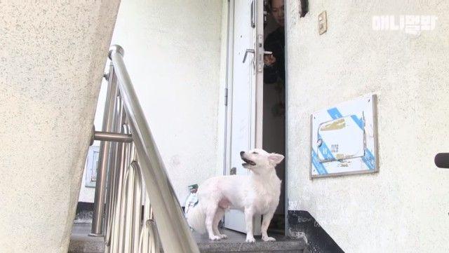 dogwaitingforsomeone1_e