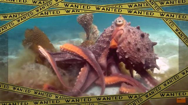 octopus3-frame