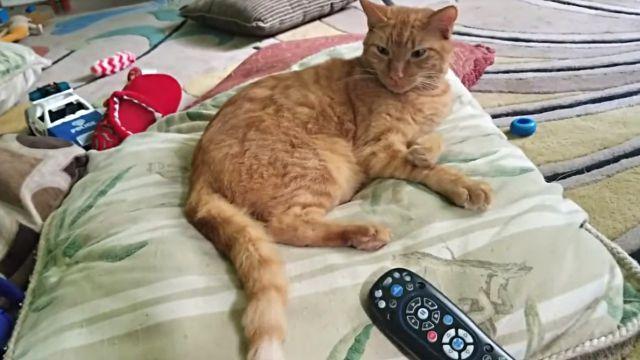 catnmonkeyTV5