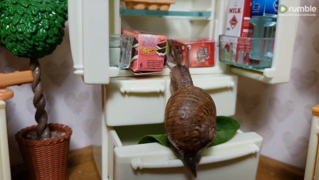 snail2_e