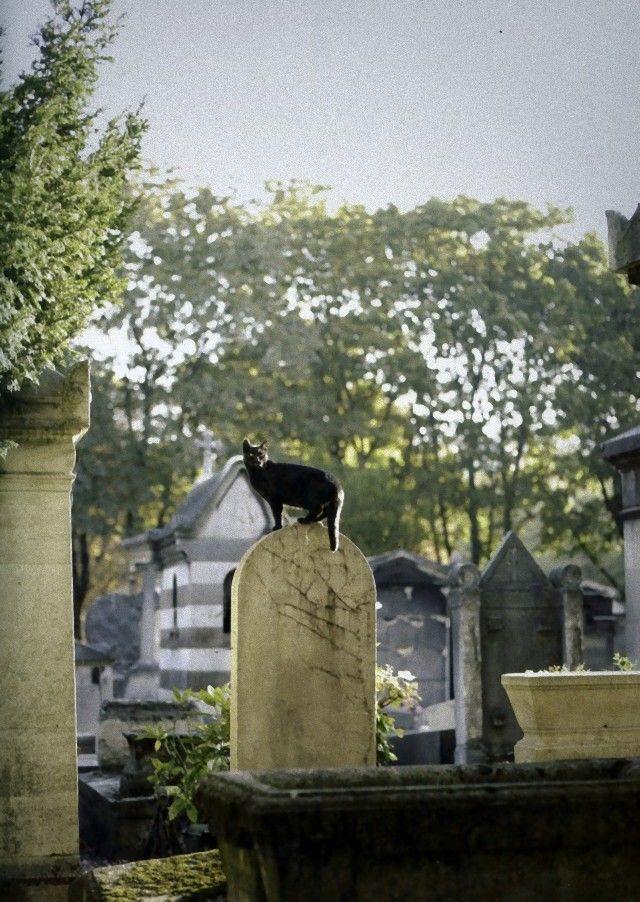 cimetière-montmartre_e