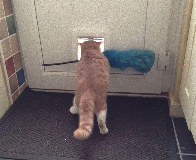 funny-idiot-cats-260-5ae07e5331937__605_e