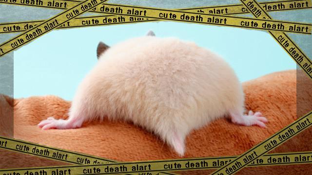 hamster-butt4_e-frame