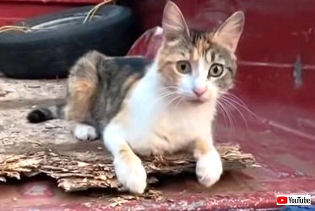 tiktokcats5_640