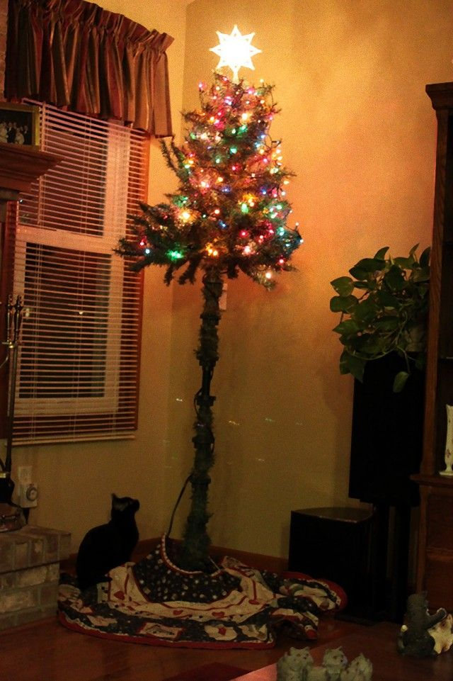 protecting-christmas-tree-from-dogs-cats-pets-5a