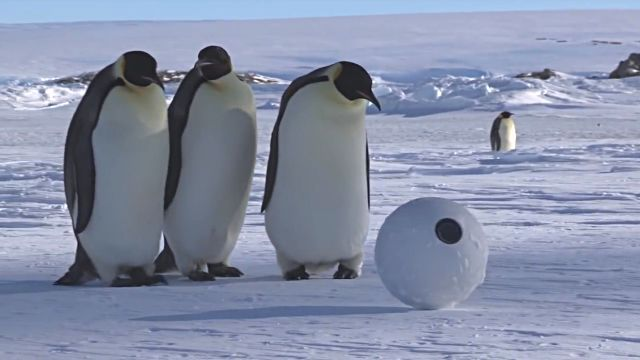 snowballcam2