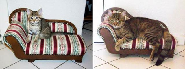 cat-7 [www.imagesplitter.net]