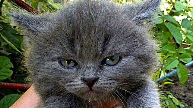 angry-kittens-19-591afc4d0684b__700_ae
