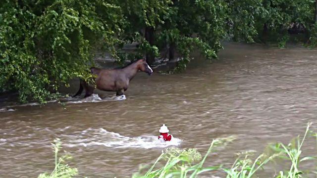 floodhorse1
