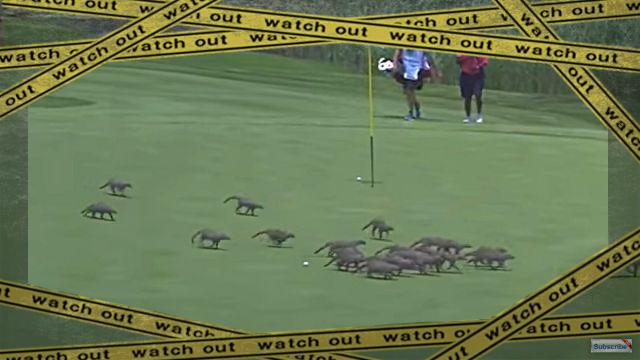 golf1-frame