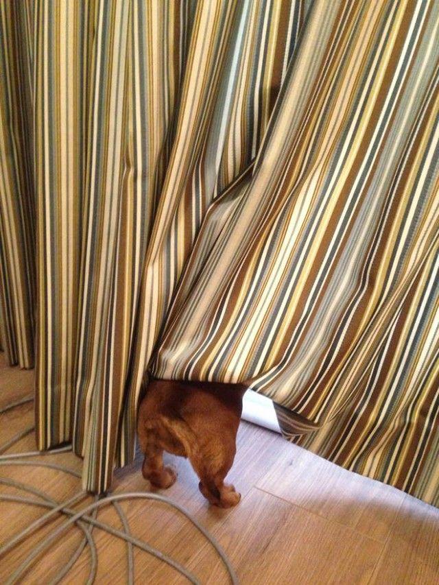 hide-and-seek10_e
