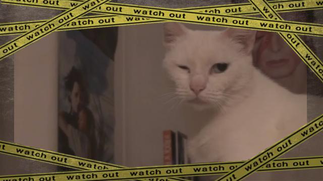 cat-wink [www-frame