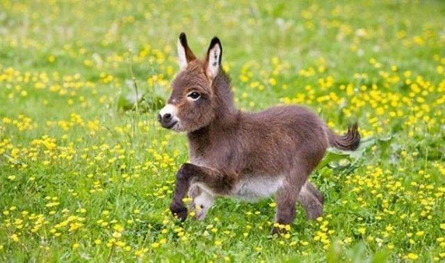 donkey0_e