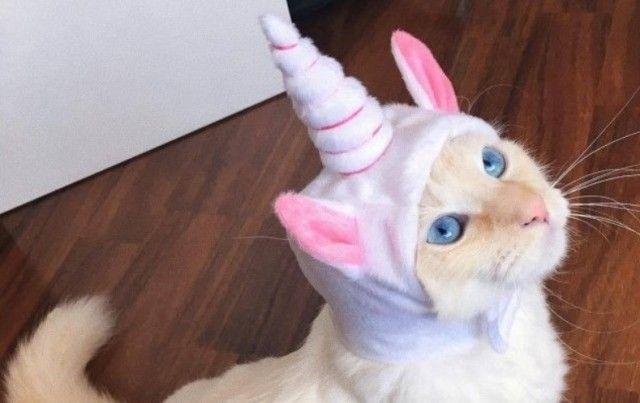 unicorn0_e