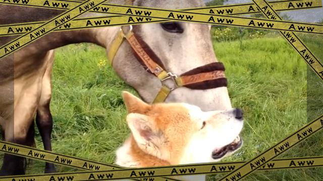 dogandhorse [www-frame