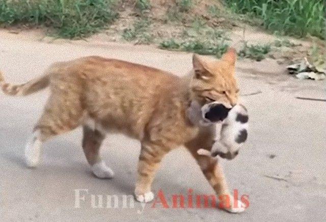 mothercats5_e