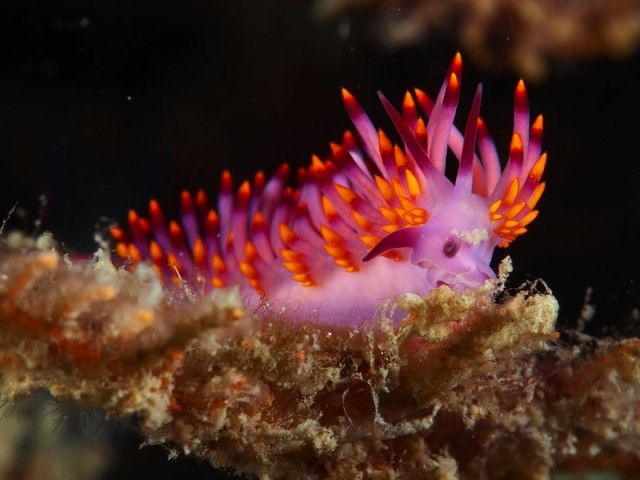 beautiful-unusual-sea-slugs-35__880_e