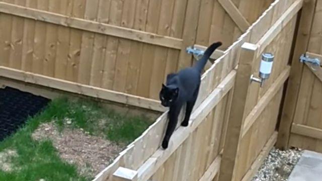 climbingcat4