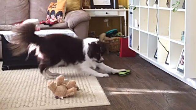 smartdog2