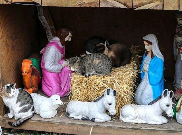 cats-crashing-nativity-scenes-113-5a27cbbf9bd24__605_e