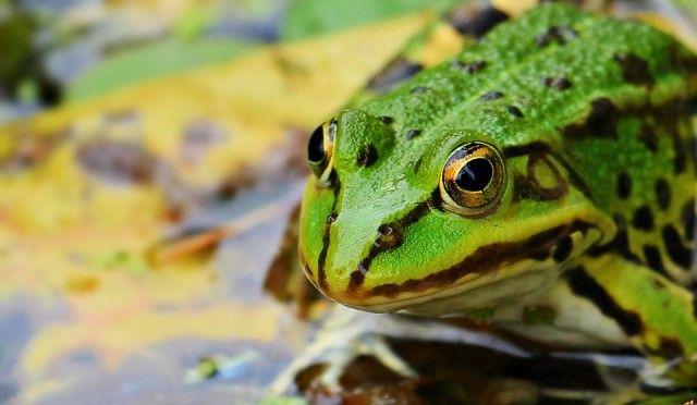frog-1530803_960_720_e