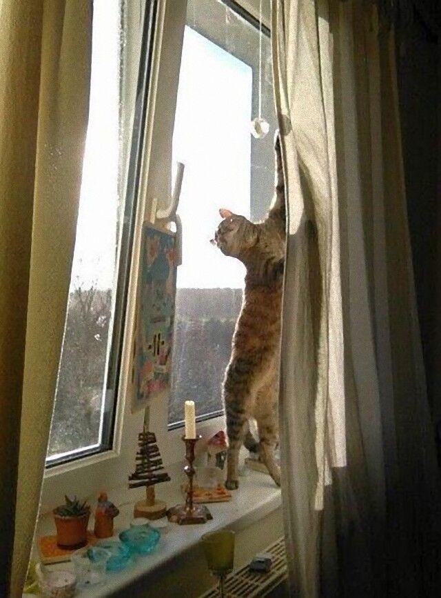 cat (3)_e