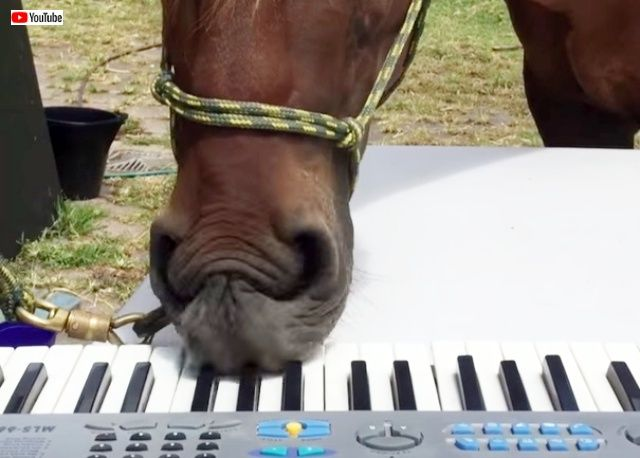 horseplayingpiano2_640