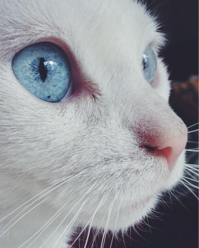 eyes-8 [www.imagesplitter.net]