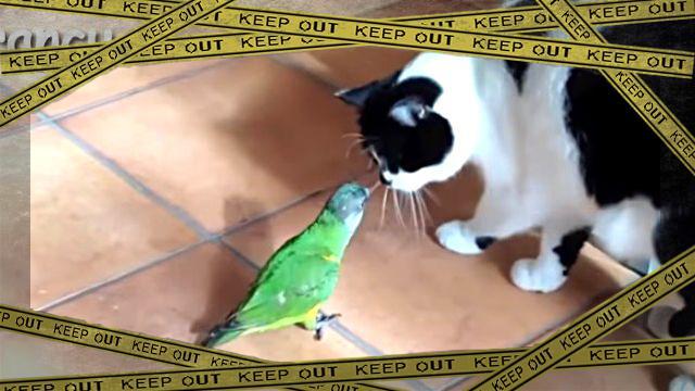 parrotcat3-frame