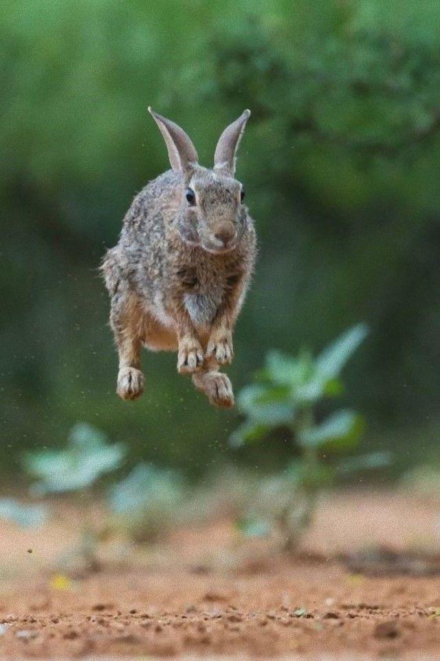 jump7_e