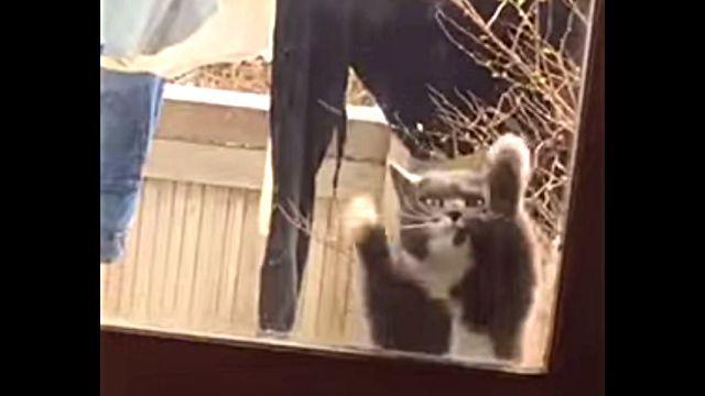 dancingcat1