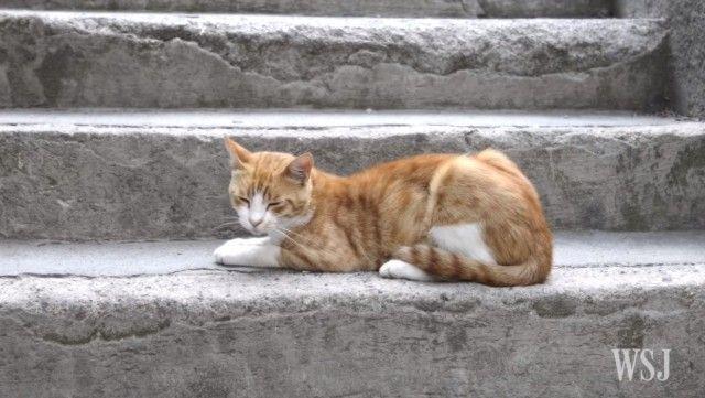 istanbulcats5_e