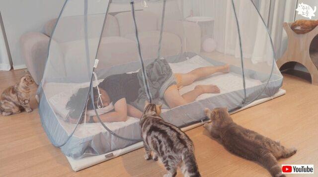 夏が来た!蚊帳の中でゆっくり寝よう…と思ったけれど、猫がいる生活では難しい