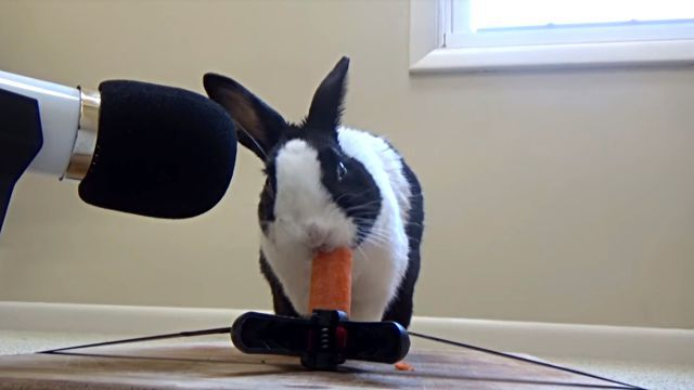 rabbitncarrot3