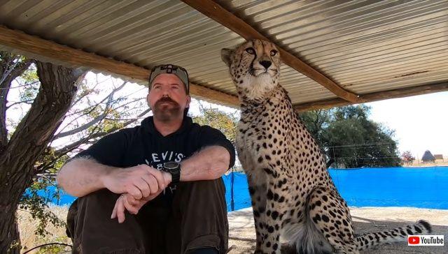 cheetah0_640