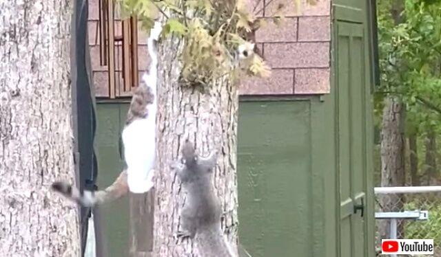 catnsquirrels0_640