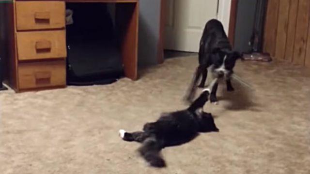 ninjacats5